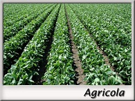 Marco_2_Agricola
